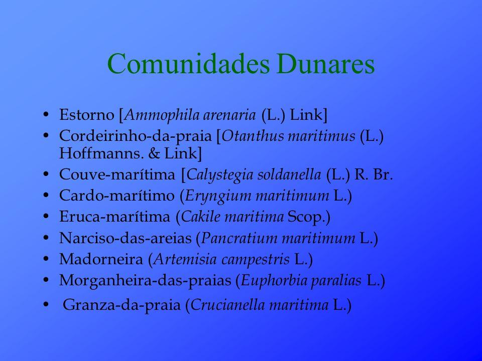 Comunidades Dunares Estorno [Ammophila arenaria (L.) Link]